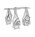 sleeping bats sketch engraving vector image vector image