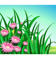 A garden with daisy flowers vector image vector image