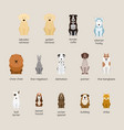 dog breeds set large and medium size vector image vector image