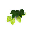 green realistic beer hop cones with leaves vector image vector image