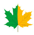 half green and half yellow autumn leaf vector image vector image