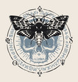 occult hand-drawn banner with moth and human skull vector image