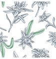 seamless pattern with hand drawn pastel edelweiss vector image