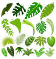 set leaves tropical plants and trees vector image vector image