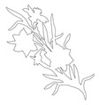 botanical contour of hand drawn flowers daffodils vector image