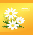 cartoon camomile card poster vector image vector image
