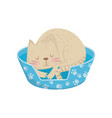 cat sleeping in his cozy bed adorable domestic vector image vector image