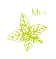 Hand drawn mint branch with leaves isolated on vector image vector image