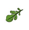 leaf flat vector image