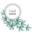 round copyspace frame with palm leaves vector image vector image