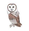 sketchy a screech owl vector image