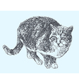digital sketch drawing of cat vector image vector image