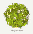 green vegetables ball vector image