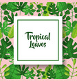 tropical leaves greeting card green vector image