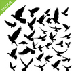 Flying birds silhouette vector image
