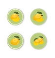 Round stickers with a tropical mango fruit vector image vector image