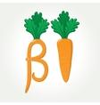 Beta-Carotene provitamin A healthy carrot vector image vector image