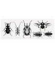 collection high detailed insects sketches hand vector image vector image