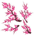 pink plum blossom branch set vector image vector image