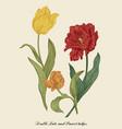 bouquet garden tulips vector image vector image