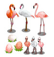 group large and small flamingos with eggs vector image