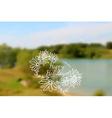 blurred landscape view nature vector image