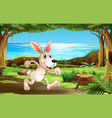 rabbit running in park vector image