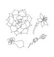 set continuous line succulents vector image vector image