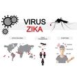 zika virus infographics vector image