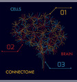 brain cells connectome vector image