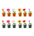 different types of flowers in pots vector image