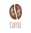 pencil drawing of a coffee bean vector image vector image