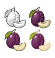 whole and slice plum with seed and leaf vector image vector image