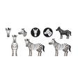 zebra set vector image vector image