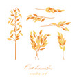 oat branches set - vector image vector image