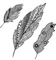 Set of hand drawn feathers in tribal style vector image