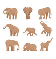 african large elephants big wild elephants exact vector image vector image
