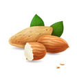 almonds kernels and leaves realistic vector image vector image