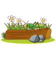 isolated picture grasshopper on log vector image vector image