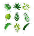 tropical leaves foliage frond plant botanical vector image vector image