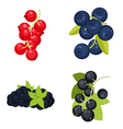 Berries vector image