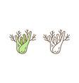 healthy organic fennel root in vector image vector image