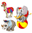 animals from circus llama elephant rhinoceros vector image vector image