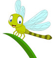 cartoon funny dragonfly on leaf vector image vector image