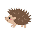 cute hedgehog isolated on white background vector image