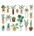 home potted plants houseplants in plant pots vector image vector image