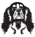 cavalier king charles spaniel black white vector image vector image