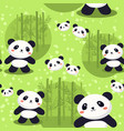 panda bear seamless pattern green bamboo vector image