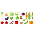 vegetables design element set vector image