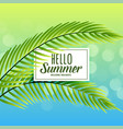 beautiful summer background with tropical leaves vector image